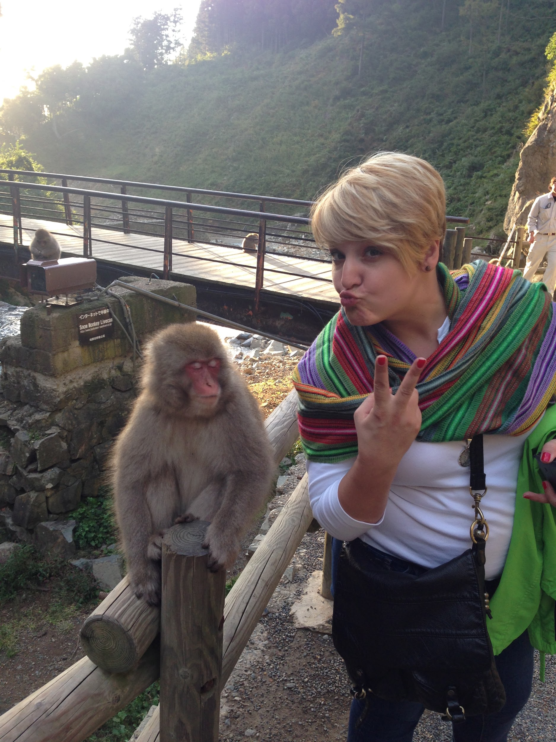 Monkey business in Jigokudani Monkey Park