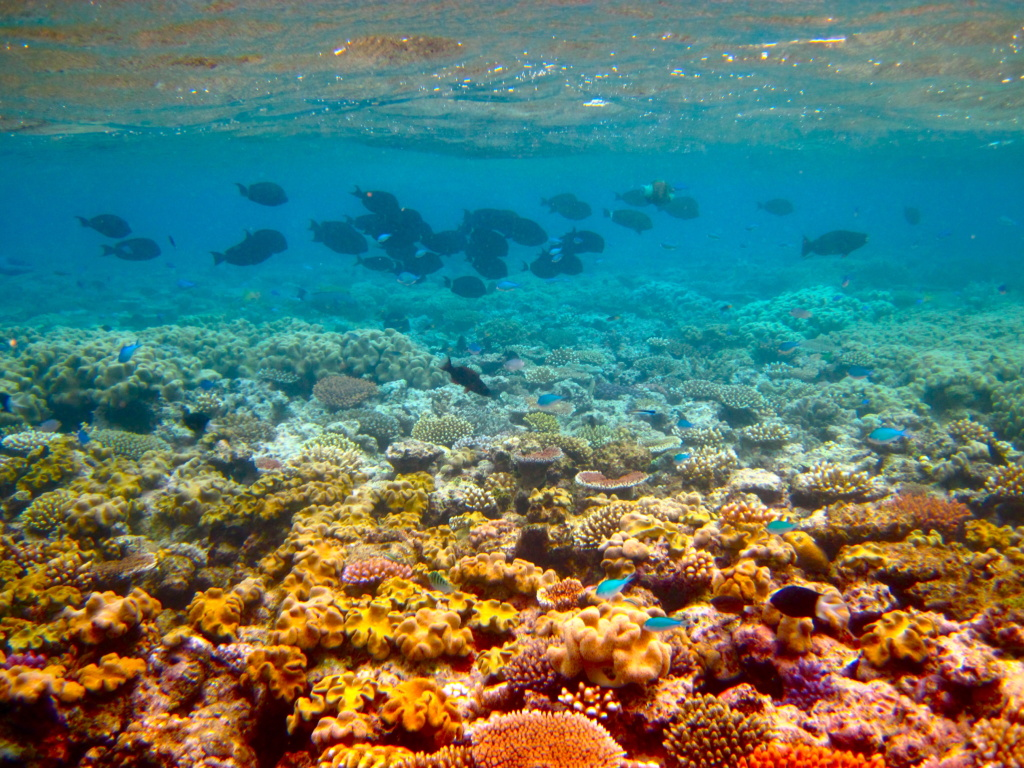 Outer Great Barrier Reef by Kyle Taylor